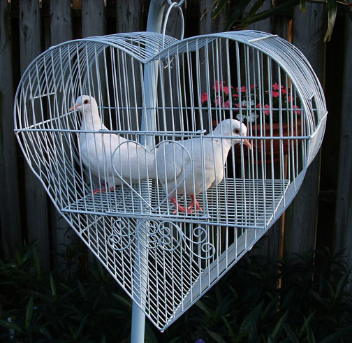 wedding doves in a cage