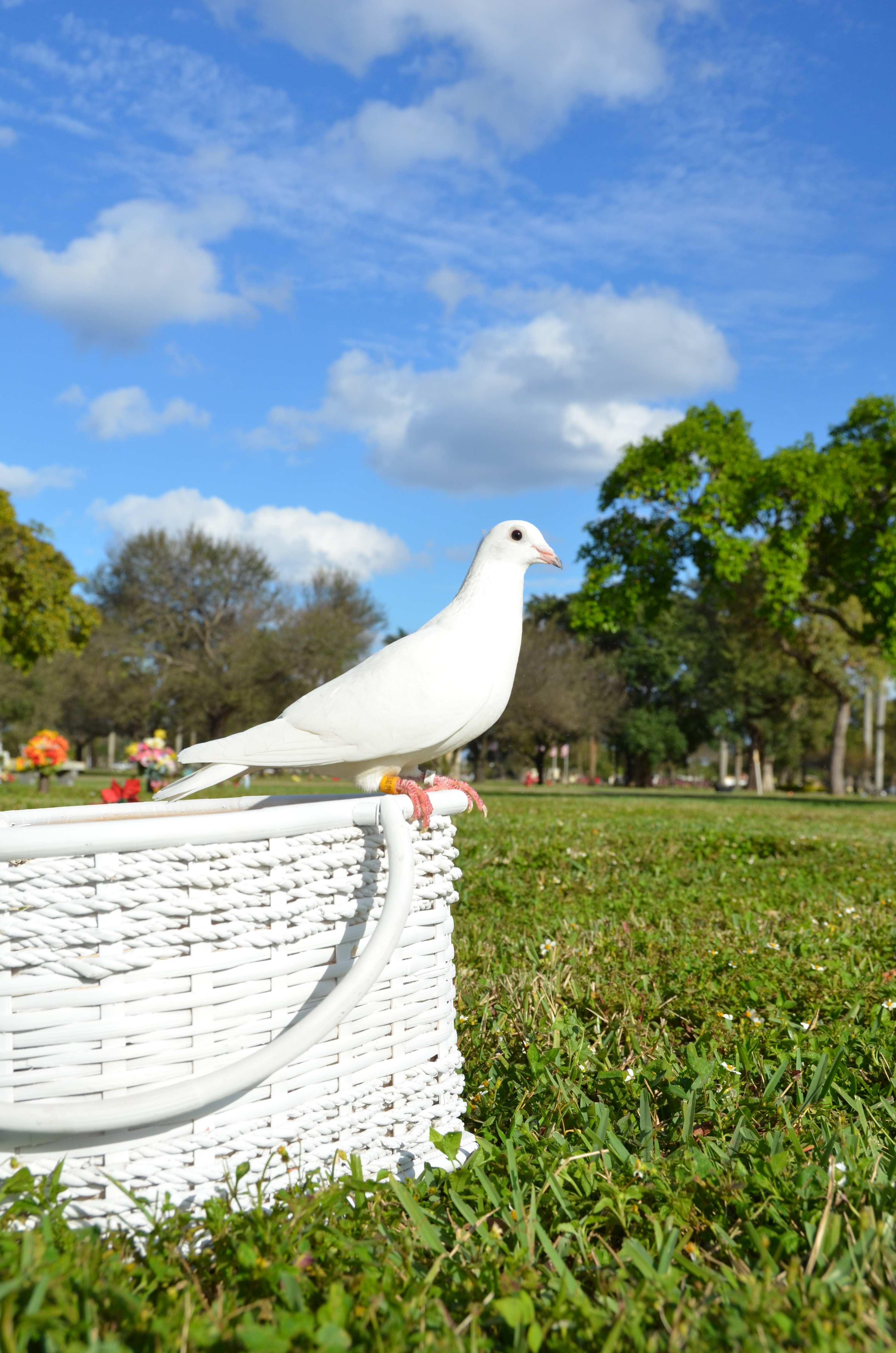 Dove at Cemetery